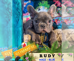 Image preview for Ad Listing. Nickname: RUDY