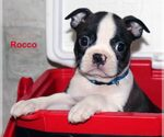 Image preview for Ad Listing. Nickname: Rocco