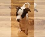Puppy 1 Rat-Cha