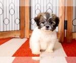 Small #2 Zuchon