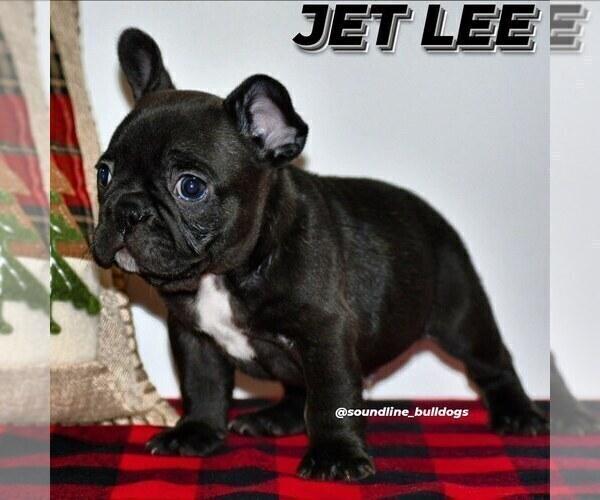 Medium Photo #9 French Bulldog Puppy For Sale in GRAHAM, WA, USA