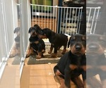 Small #4 Doberman Pinscher