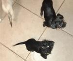 Puppy 1 ShiChi