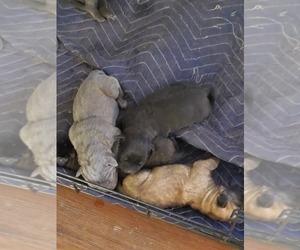 Puppies For Sale Near Eagle Colorado Usa Page 1 10 Per
