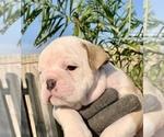 Small #4 Bulldog