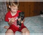 Schnauzer (Miniature) Puppy For Sale in ALEXANDER, NC, USA