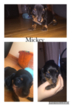 Dachshund Puppy For Sale in GRANBY, CT