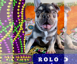 Image preview for Ad Listing. Nickname: ROLO