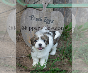 Cavaton Puppy for sale in LEBANON, TN, USA