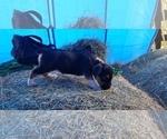 Small #1 Rat Terrier Mix
