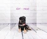 Small #2 German Shepherd Dog-Wolf Hybrid Mix