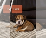Image preview for Ad Listing. Nickname: Tiny Twix