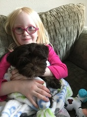 Havanese Puppy For Sale in WATERLOO, IA