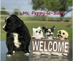 Image preview for Ad Listing. Nickname: Peppy-la-Baker