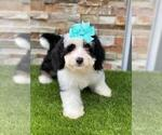 Image preview for Ad Listing. Nickname: Mini Macy