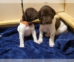 Small #10 German Shorthaired Pointer