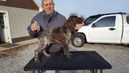 German Shorthaired Pointer Puppy For Sale in NORTH JUDSON, Indiana,