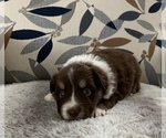 Image preview for Ad Listing. Nickname: Puppy #5