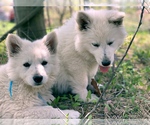 Image preview for Ad Listing. Nickname: BBS Puppy!