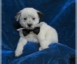 Image preview for Ad Listing. Nickname: SIR SNOWBALL