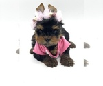 Small #2 Yorkshire Terrier