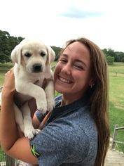 Labrador Retriever Puppy For Sale in BELLS, TX, USA