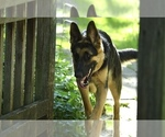 Image preview for Ad Listing. Nickname: German Shepherd