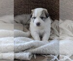 Small #48 Great Pyrenees