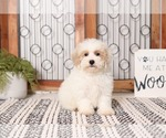 Image preview for Ad Listing. Nickname: Wooly