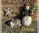 Image preview for Ad Listing. Nickname: Preston