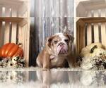 Image preview for Ad Listing. Nickname: Mr. Wrinkles