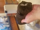 French Bulldog Puppy For Sale in WINNETKA, CA