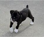 Small #19 Boxer