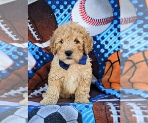 Poochon Puppy for sale in LEOLA, PA, USA