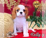 Image preview for Ad Listing. Nickname: Kelly