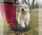 Small #49 German Shepherd Dog