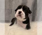 Small #15 Bulldog
