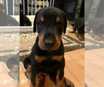 Small #5 Doberman Pinscher
