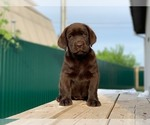 Small #4 Labrador Retriever
