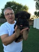 German Shepherd Dog Puppy For Sale in DENTON, TX,
