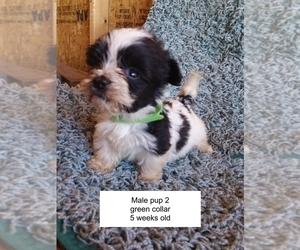 Havanese Puppy for sale in LACYGNE, KS, USA