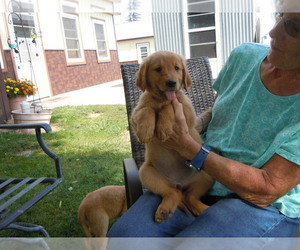 Golden Retriever Puppy for Sale in ALLIANCE, Nebraska USA