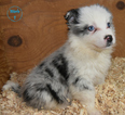 Small #6 Border Collie