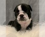 Small #11 Bulldog