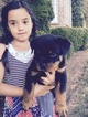 Rottweiler Puppy For Sale in FRANKLIN, TN, USA