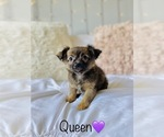 Small Photo #3 Chihuahua Puppy For Sale in COOKEVILLE, TN, USA