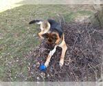 Small #1055 German Shepherd Dog