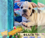 Image preview for Ad Listing. Nickname: OLLIE