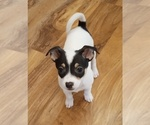 Puppy 0 Rat-Cha