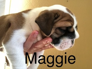English Bulldog Puppy For Sale near 95776, Woodland, CA, USA
